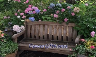 Flower GIft Korea at the Garden of Morning Calm July 2016