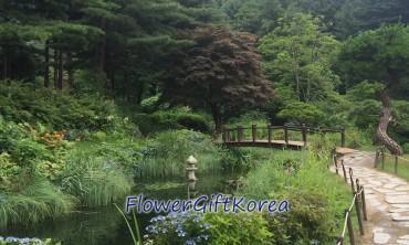 Flower Gift Korea at the Korean Garden