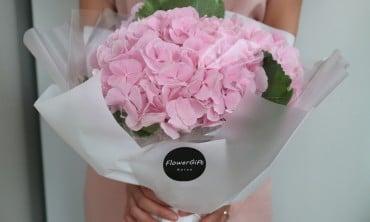 Flower Gift Korea Presents Hydrangeas in Korea