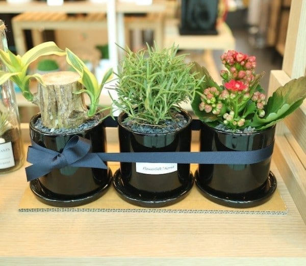 Plants in Korea and Flower Gift Korea Air Purifying Plant Set