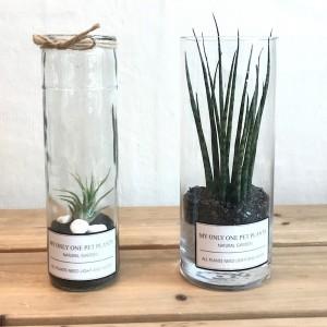Seoul Flower Shop Glass Cylinder Set A