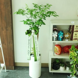 Happy Tree Business Gift Delivery to Korea