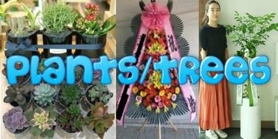 Flower Shop Korea Plants Succulents Cactus