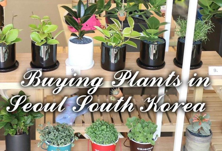 Plants available in Seoul South Korea