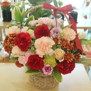 Flower Gift Korea Carnation Medley