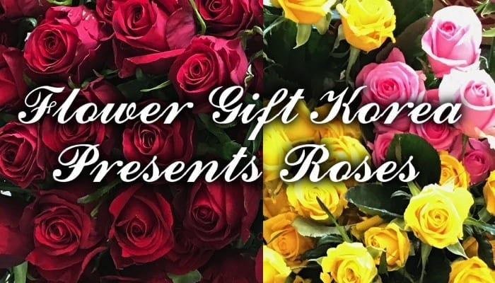 Flower Gift Korea presents Roses as Gifts for Delivery in Seoul Korea