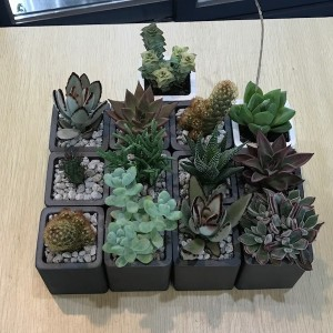 Flower Gift Korea Plants and Succulents Delivery Service