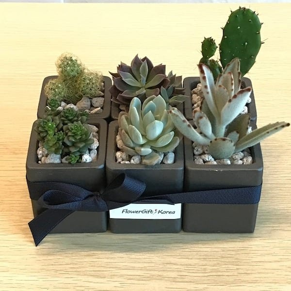 Flower Delivery Korea Succulent and Plant Gift Set A