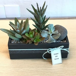 Flower Delivery Service Korea Plant gift