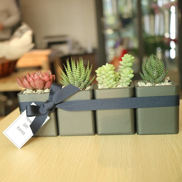 Flower Shop Korea Succulent and Cactus Gift Set B