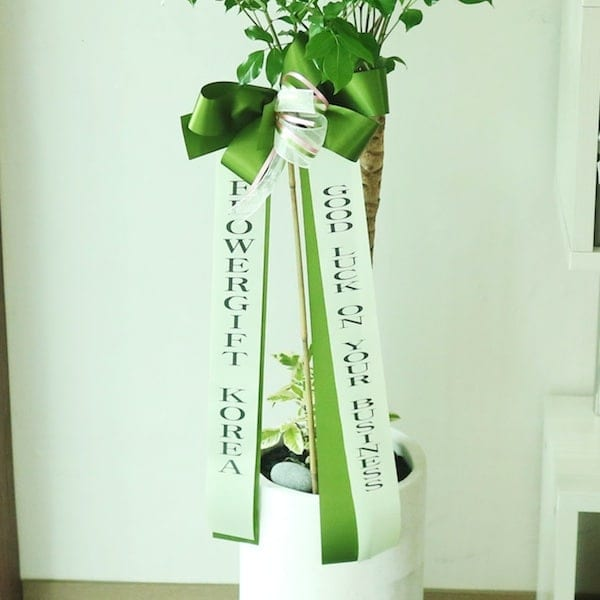 Plant and Tree Gift Ribbon Delivery to Korea