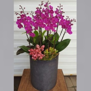 Flower Gift Korea Orchid 170 A