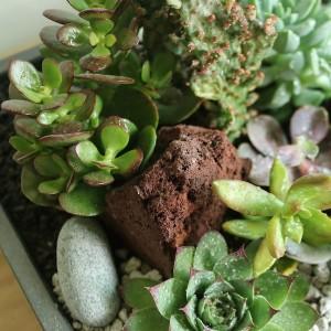 Succulent and Cactus Design Korea Delivery