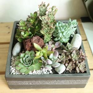 Flower Gift Korea Succulent and Cactus Design Gift
