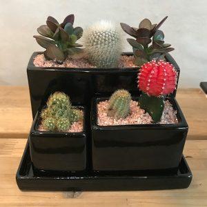 3 Piece Succulent Gift Set to Korea Main