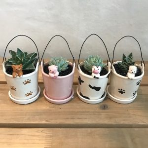Cute Animal Succulent Set Flower Gift Korea Main