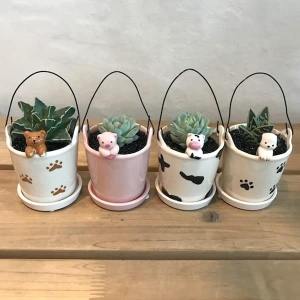 Cute Animal Succulent Set Flower Gift Korea Main