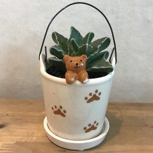 Cute Animal Succulent Set Korea Flower Delivery Bear