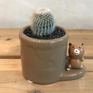 Korea Flower Seoul Delivery Succulent Animal Set 3 Bear
