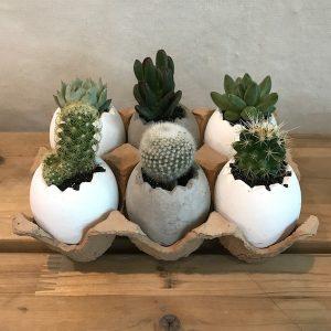 Succulent Gift Set Seoul South Korea Egg Tray